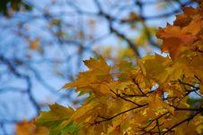 Free Autumn Leaves Stock Photos - 3427873
