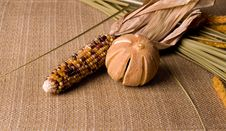 Free Indian Corn And Dried Orange Royalty Free Stock Photography - 3428167