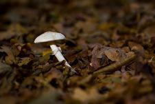 Free White Mushroom Stock Photos - 3429063