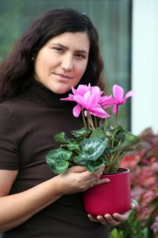 Free Cyclamen Plant Care Royalty Free Stock Photography - 3429147