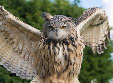 Free Eagle Owl Royalty Free Stock Image - 3429436