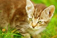 Free Kitten In The Grass Stock Images - 3429614
