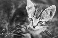 Free Kitten In The Grass Royalty Free Stock Image - 3429616