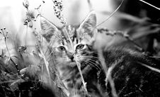 Free Kitten In The Grass Royalty Free Stock Photos - 3429658