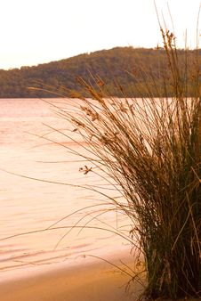 Long Grass By A Lake Australia Stock Photo