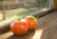 Free Two Tomatoes Royalty Free Stock Image - 3429956