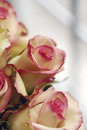 Free Yellow And Pink Roses - Cezanne Royalty Free Stock Images - 34202049