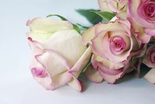 Free Yellow And Pink Roses - Cezanne Stock Photo - 34203710