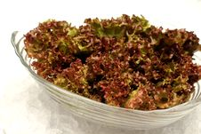 Free Red Cabbage Lettuce Head Royalty Free Stock Photo - 34206885
