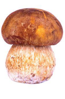 Free Porcini Mushroom Stock Photography - 34207792
