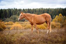Free Horse Stock Photography - 34209502