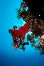Free Underwater Scene Royalty Free Stock Photography - 34217977