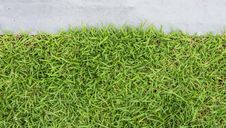 Free Grass Texture Royalty Free Stock Photo - 34216585