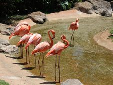 Free Flamingos Stock Images - 34259934