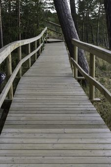 Free Wooden Bridge Into The Forest Royalty Free Stock Photo - 34269055