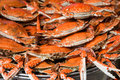 Free Steamed  Spotted Crab Royalty Free Stock Photo - 34278215