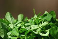 Free Green Fenugreek Leaves Stock Photo - 34279240
