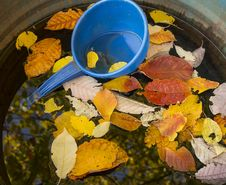Free Colours Of Autumn Stock Photography - 34273762