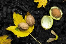 Free Nuts,leafs And Charcoal Stock Images - 34277214