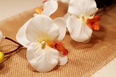 Free White Orchid Stock Photography - 34281902