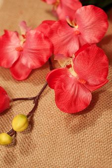 Free Pink Orchid Royalty Free Stock Photography - 34281907