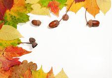 Free Autumn Leaves Stock Photos - 34283663