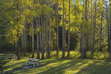 Free Aspen Trees And Picnic Tables In Fall Stock Photos - 34288483