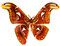 Free Butterfly Royalty Free Stock Images - 34281739