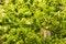 Free Green Lettuce - Background Stock Image - 34282951