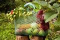 Free Autumn Basket Stock Images - 34296864