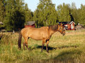 Free Horse On A Pasture Royalty Free Stock Photos - 34299408