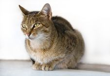 Free Cat On The Street Royalty Free Stock Photography - 34292907