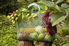Free Autumn Basket Stock Images - 34296864