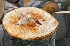 Free Close Up Of A Sliced Tree Royalty Free Stock Photo - 34299175
