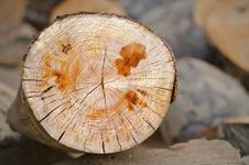 Free Close Up Of A Sliced Tree Royalty Free Stock Image - 34299176