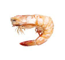 Free Shrimps On A White Background Stock Photos - 34299613