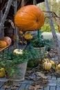 Free Autum Pumpkin Decoration Stock Photo - 3431720
