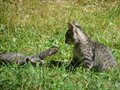 Free Playing Kittens Stock Image - 3432891