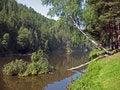 Free Birch Under Water. Stock Photo - 3439680