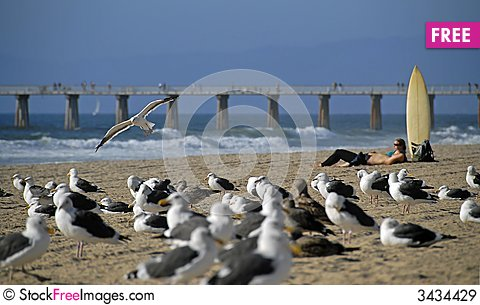 Free Sea Gulls And Surfers Royalty Free Stock Images - 3434429