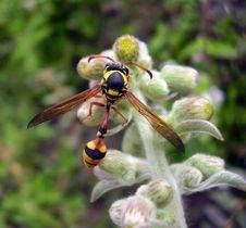 Free Bee Stock Image - 3430531