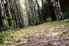 Free Autumn Road Stock Photos - 3430533
