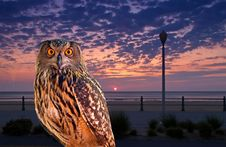 Free An Owl At An Early Morning Royalty Free Stock Image - 3430796