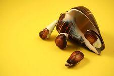 Free Chocolate Seashells Yellow II Stock Image - 3430901