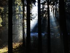 Free Sunray In Forest Stock Photo - 3431630
