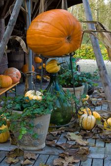 Free Autum Pumpkin Decoration Stock Photo - 3431720