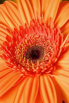 Free Orange Flower Stock Image - 3431851