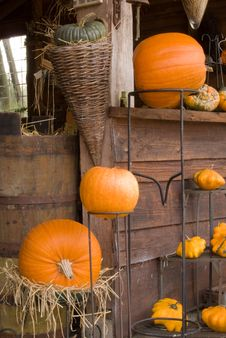 Free Autum Pumpkin Decoration Stock Photos - 3431873