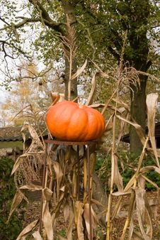 Free Pumpkin Garden Decoration Stock Photo - 3431980