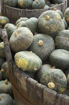 Free Plenty Of Pumpkins Royalty Free Stock Photo - 3432735